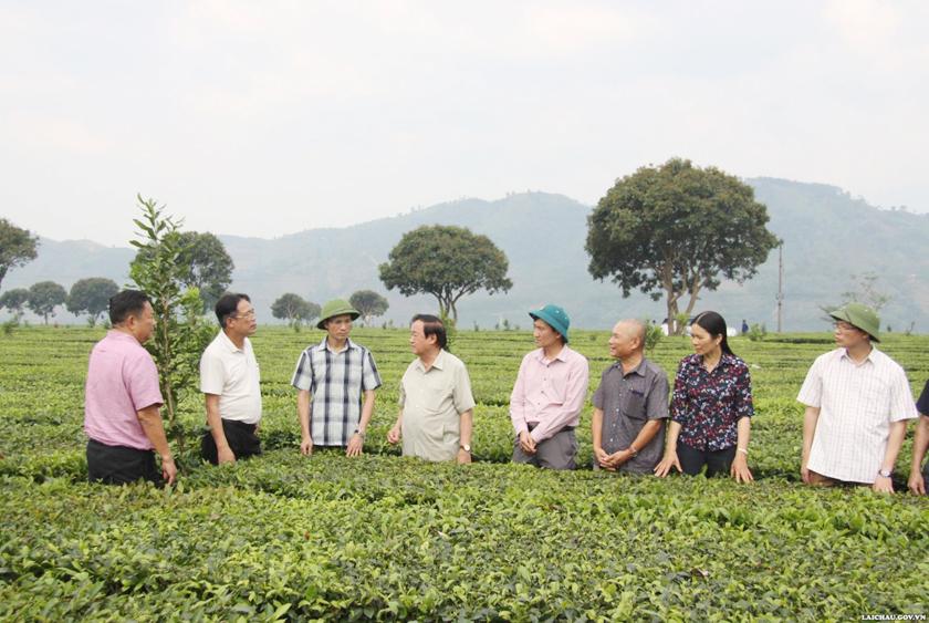 Hiệp hội Mắc ca Việt Nam thăm quan, đánh giá tình hình trồng và phát triển Mắc ca tại tỉnh Lai Châu