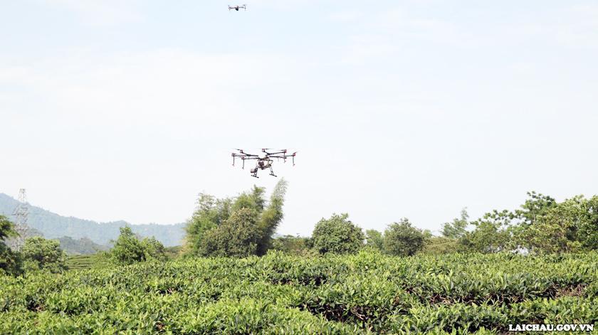 Công ty Cổ phần Đầu tư và Phát triển Chè Tam Đường: Thử nghiệm phun thuốc bảo vệ thực vật bằng máy bay không người lái